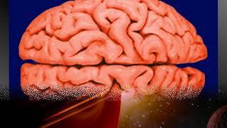 Базиды. Скрытое Воздействие на Сознание. Безграничный Источник Драгоценных Идей