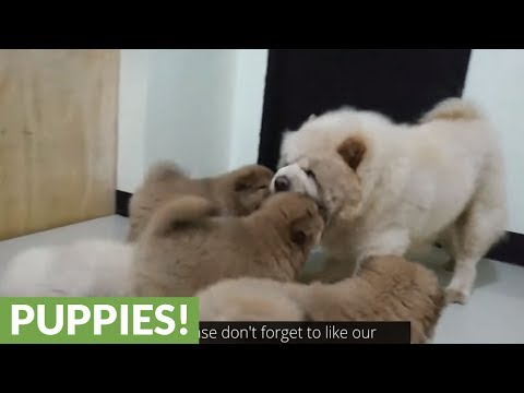 Mamma dog bonds with puppies over playtime