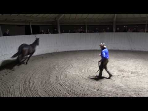 Monty Roberts Explains Join-Up® With Equus, The Horse