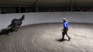 Monty Roberts explains JoinUp® with Equus, the horse