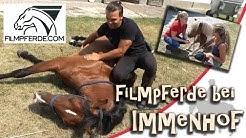 Das sind die Pferde vom neuen Film Immenhof - Das Abenteuer eines Sommers - Setvisit