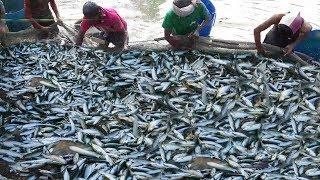 Natural Fishing In Bangladesh | Million Fish Catching