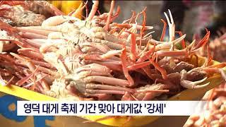 [포항MBC뉴스]영덕 대게 축제 기간 맞아 대게값 '강…