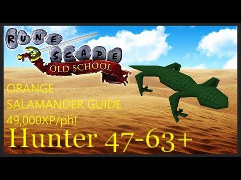 OSRS: Orange Salamander Hunter Guide 49,000 XP/HR