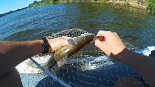 Ловлю Судака на Джиг | Клёв Судака | Рыбалка на Спиннинг 2016 (Fishing Video of Predator) - MF №73(Ловля судака на спиннинг, ловля судака на джиг – это очень интересное занятие! На этой рыбалке присутствуют..., 2016-08-17T17:01:59.000Z)