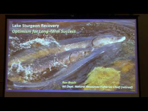 Lake Sturgeon recovery:  Optimism for longterm success.