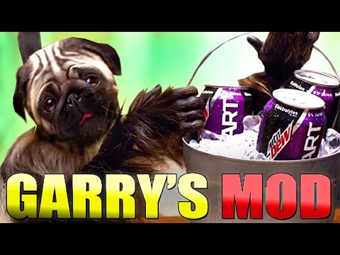 Dog And Monkey Best Friends Commercial