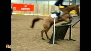 HorseJunkiesUnited.com - 1 David O