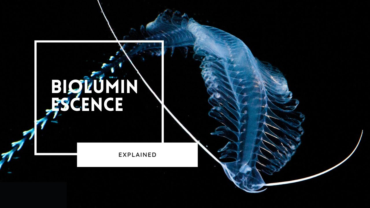 Bioluminescence Explained | Lights of the Deep Sea
