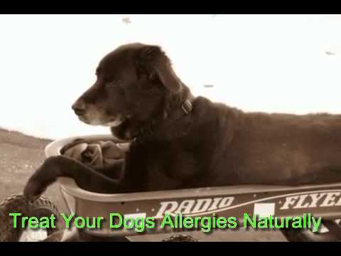 Treat Your Dogs Allergies Naturally