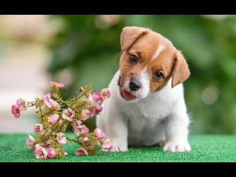 Как назвать щенка? Лучшие Имена для собак-мальчиков