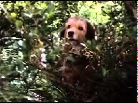 Trailer do filme Benji - Um cão desafia a selva
