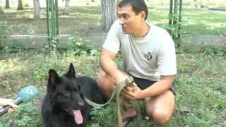 В Украине хотят ужесточить правила содержания собак