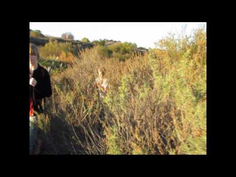 Searching For Mistletoe with Kids - Linc Kinney - The Wild West