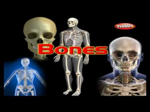 Human Body Tell Me Why | Encyclopedia of Human Body anatomy | Kids Educational Learning videos