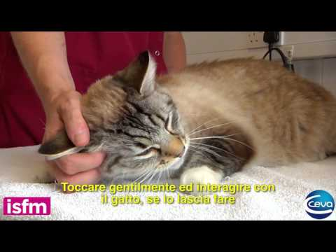 Blood pressure measurement in the cat: getting the environment right (Italian)