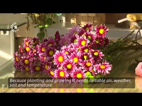 Kurdistan Region import flowers worth $50 million every year