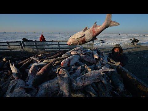شاهد: الصيادون الصينيون يكرمون البحيرة وشباك الصيد بمناسبة إفتتاح الموسم …  - نشر قبل 2 ساعة