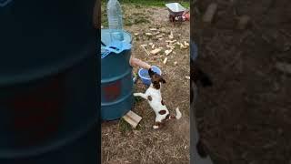 Резиновый член и собака