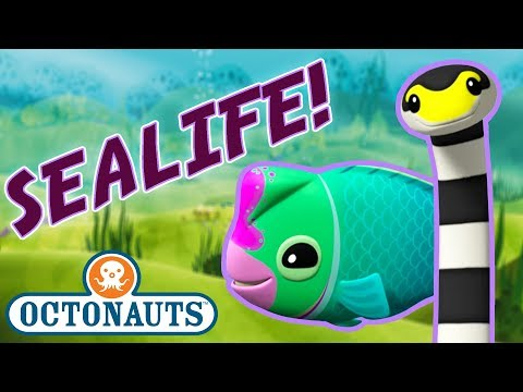 Octonauts - Learn about Sealife | Cartoons for Kids | Underwater Sea Education