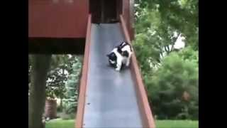 Мое любимое животное кошка!