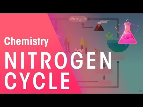 The Nitrogen Cycle | Environmental Chemistry | Chemistry | FuseSchool