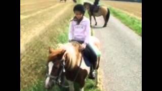 On commence les vidéos de poneys