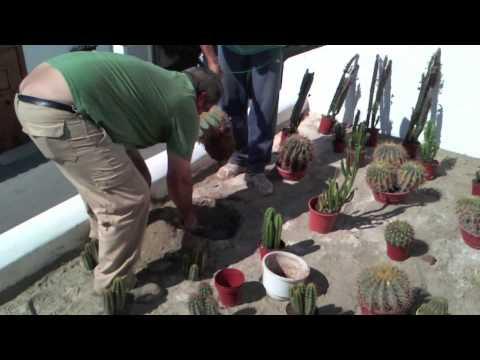 Diseño de jardines: Jardín de cactus - YouTube