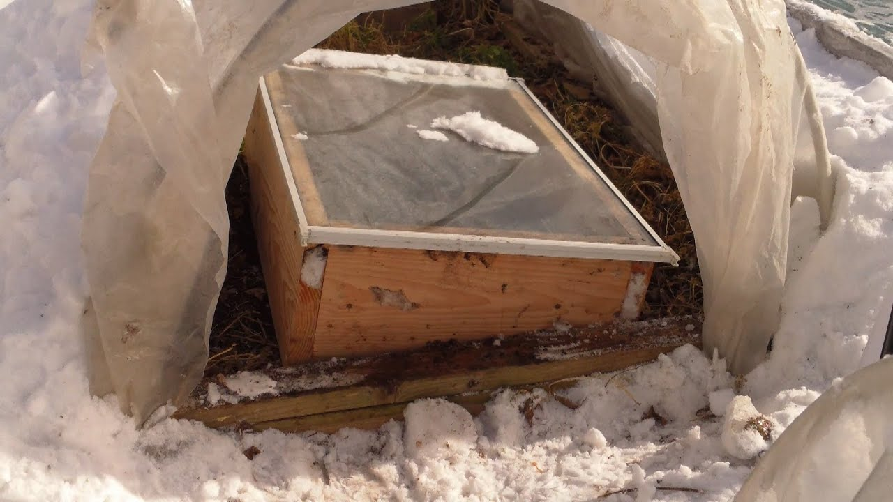 Creating a Tennessee Microclimate in Chicago with a Cold Frame in a ...