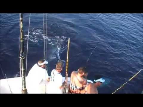 Bluefin Tuna Restaurant Virginia Beach