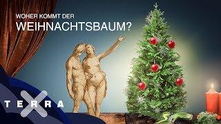 Was Adam und Eva mit dem Weihnachtsbaum zu tun haben