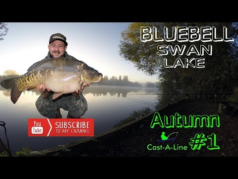 Passion For Big Carp Bluebell Swan Autumn #1