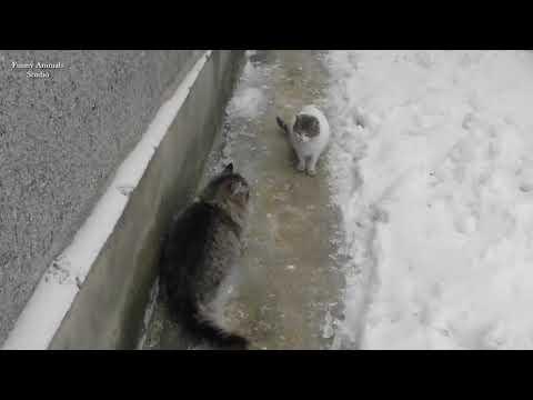 Как кошка Кетя зимой сходила на свидание ))