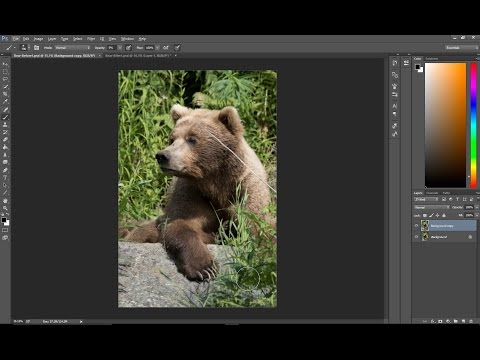 Photoshop Tip:  Key elements of editing wildlife images.  Eyes, shadows and distractions