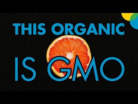 Organic GMO?!