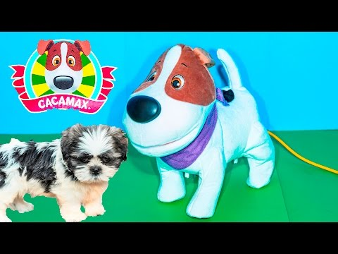 CACAMAX Pooping Dog Cacamax Fun at Dog Park + Wiggles Puppy Video Toys Unboxing