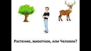 Растение, животное, или все же Человек! Мотивация.