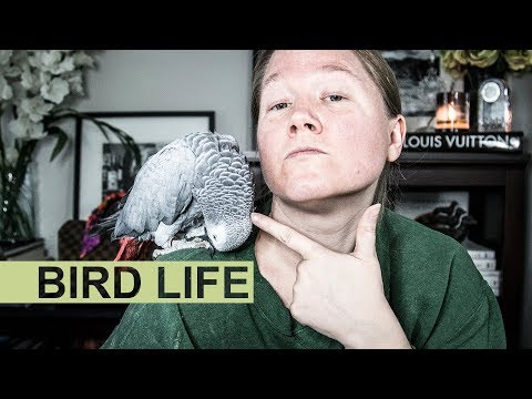 Watch This Or the Bird Gets It! || All About My African Gray Parrot Vincent || Autumn Beckman