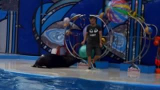 Дельфинарий в Сочи(Видео интересно детям для ознакомления с морскими животными в Дельфинарии., 2016-12-22T10:03:38.000Z)