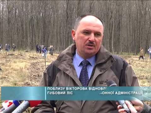 Поблизу Вікторова відновлюють дубовий ліс