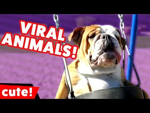 Funniest Pet & Animal Viral Videos Compilation December 2016 | Kyoot Animals