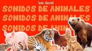 SONIDOS DE ANIMALES PARA NIÑOS (DOMESTICOS Y SALVAJES) - ANIMALS' SOUNDS FOR KIDS