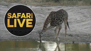 safariLIVE - Sunset Safari - June, 14. 2018 thumbnail