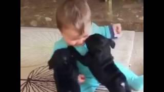 Очень милое видео собаки и дети