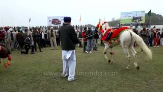 Horse dance to the tunes of music