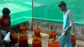 terrace farming of kids (vegetable cultivation