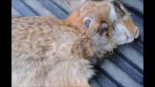 видео графики       Личинки едят олень и волк червей внутри кролика