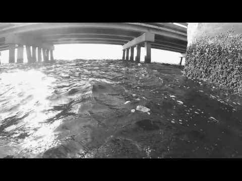 Freediving Giants Living Under the Road. Tampa Bay Interbay Tournament 2017