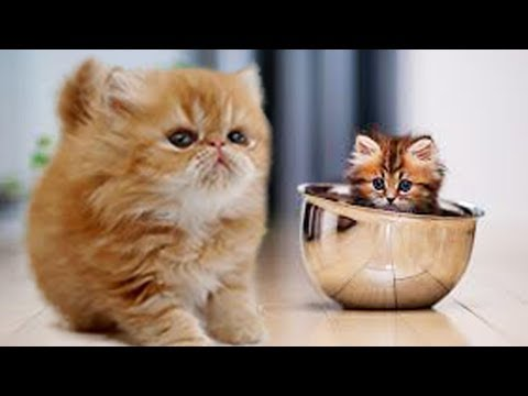 Cute Dogs And Cats Doing Funny Things 2018 Meowing #07 - Lovely Pet - CuteKH