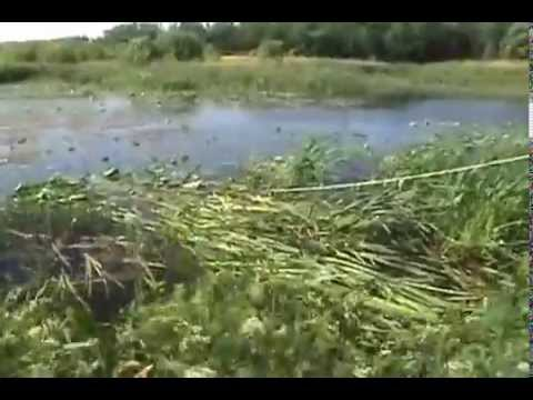 How To Cut Cattails